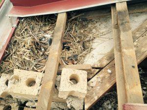 Remove bird nest in roof