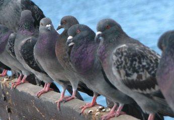 Bird Control Melbourne Eastern Suburbs