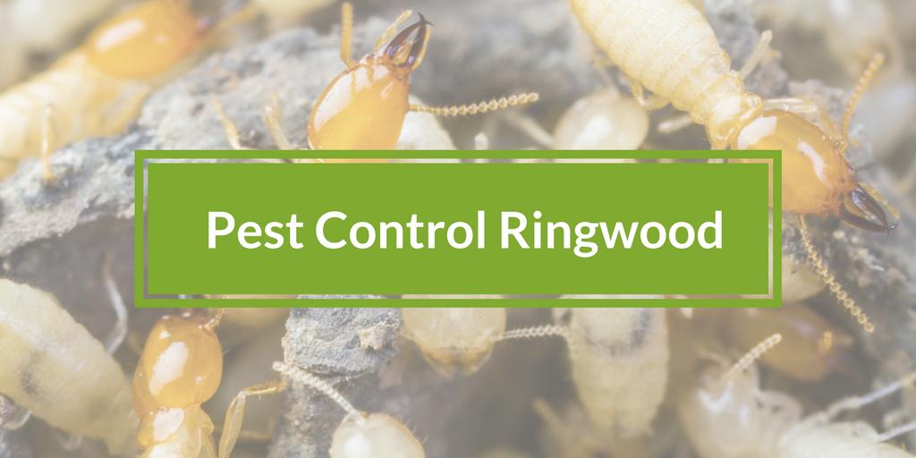 Pest Control Ringwood, Victoria 3134