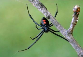 Spider Control Melbourne