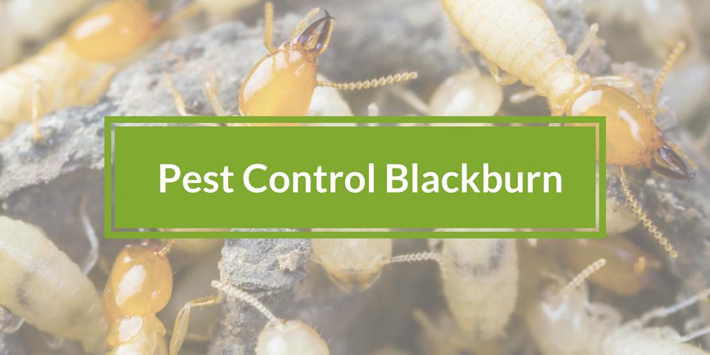 Pest Control Blackburn, Victoria 3130