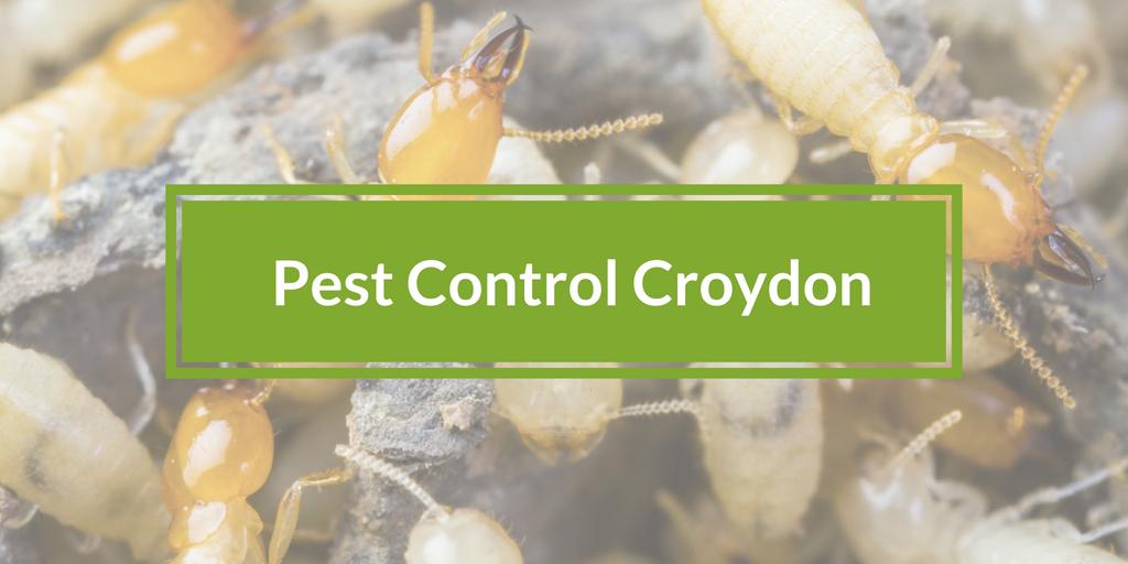 Pest Control Croydon Banner