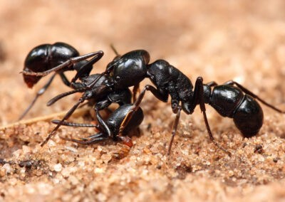 Ant Control Melbourne