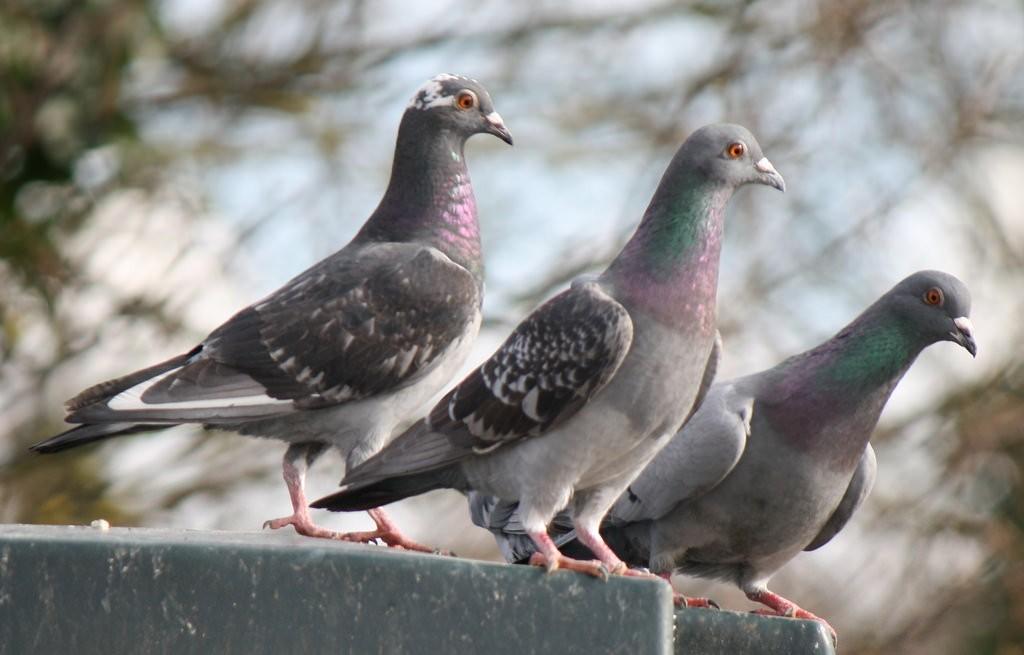 Bird Control Melbourne