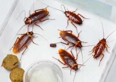 Cockroach Control Melbourne