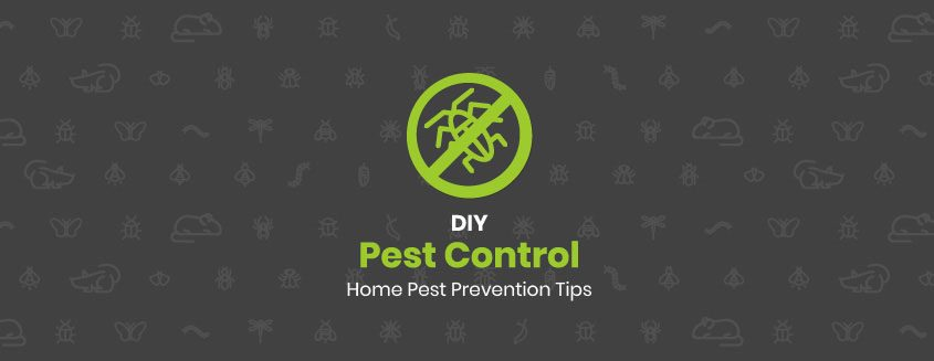 DIY Pest Control: Home Pest Prevention Tips