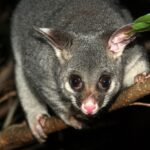 possum deterrents