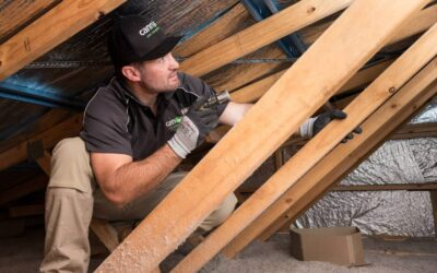 Scratching Noise in your Roof? Here are 4 Culprit Pests