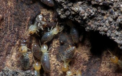 How To Spot Termites In Trees And What To Do About Them!