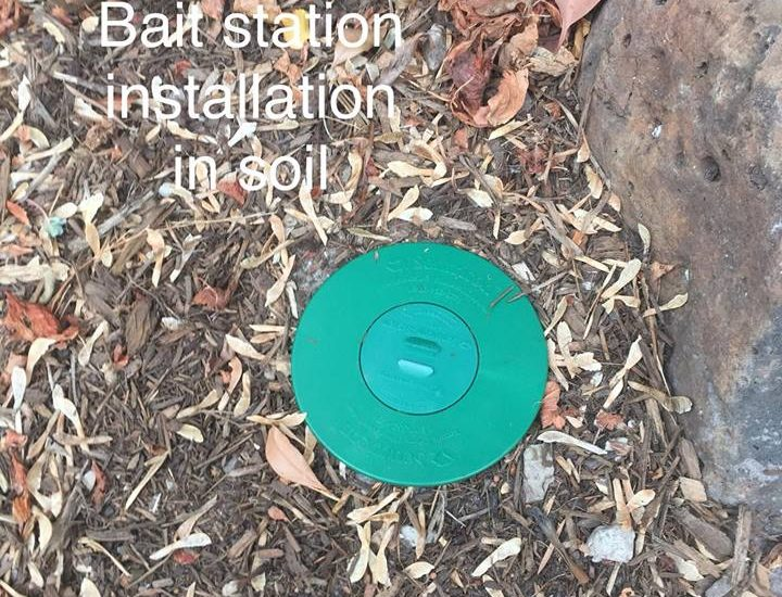 How do termite bait stations work?