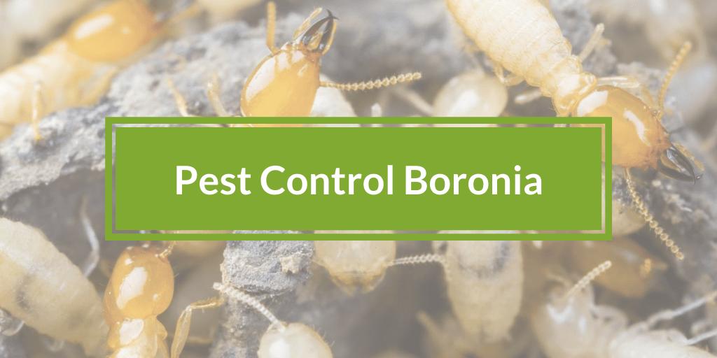 Pest Control Boronia