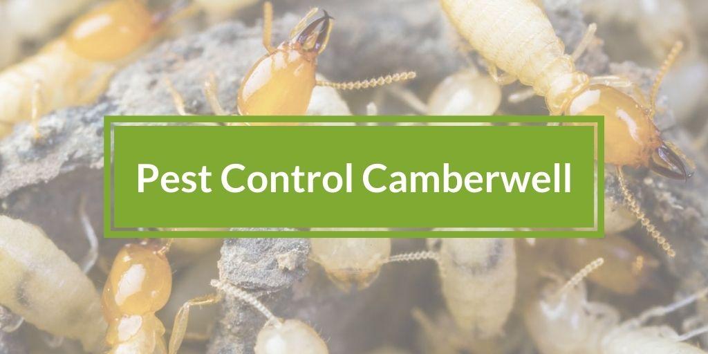Pest Control Camberwell