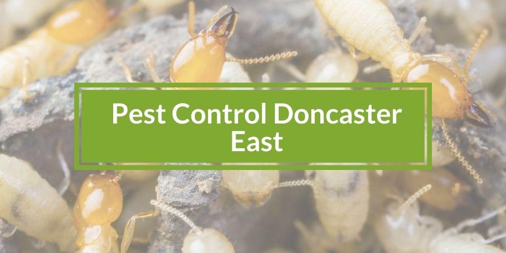 Pest Control Doncaster East