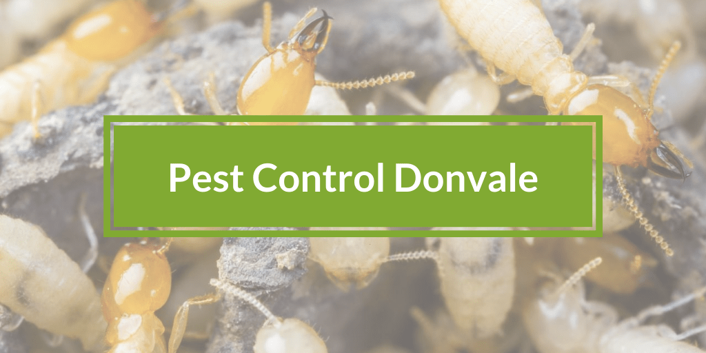 Pest Control Donvale