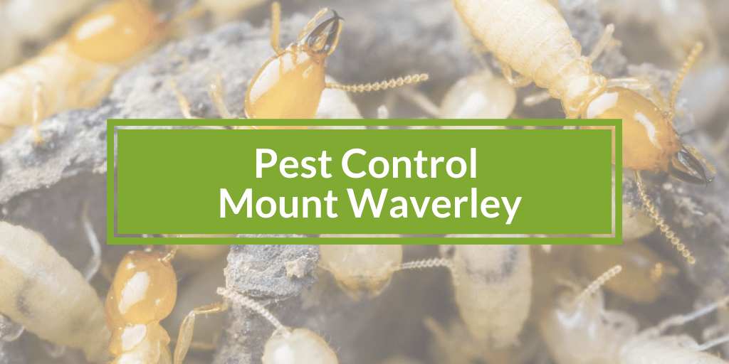 Pest Control Mount Waverley