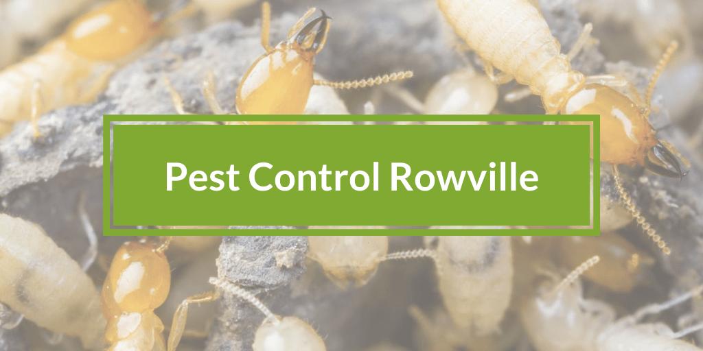 Pest Control Rowville