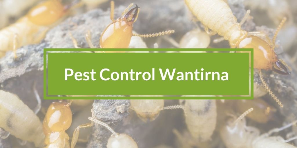 Pest Control Wantirna