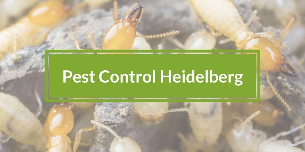 Pest Control heidelberg