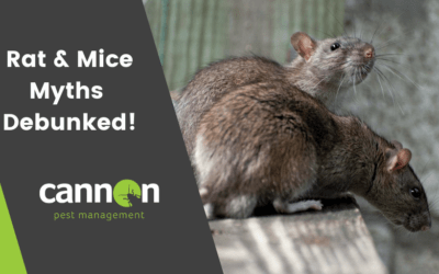 Debunking Rat and Mice Myths!