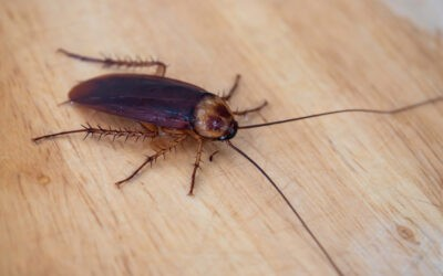 7 Things You Need to Know About Cockroach Bite
