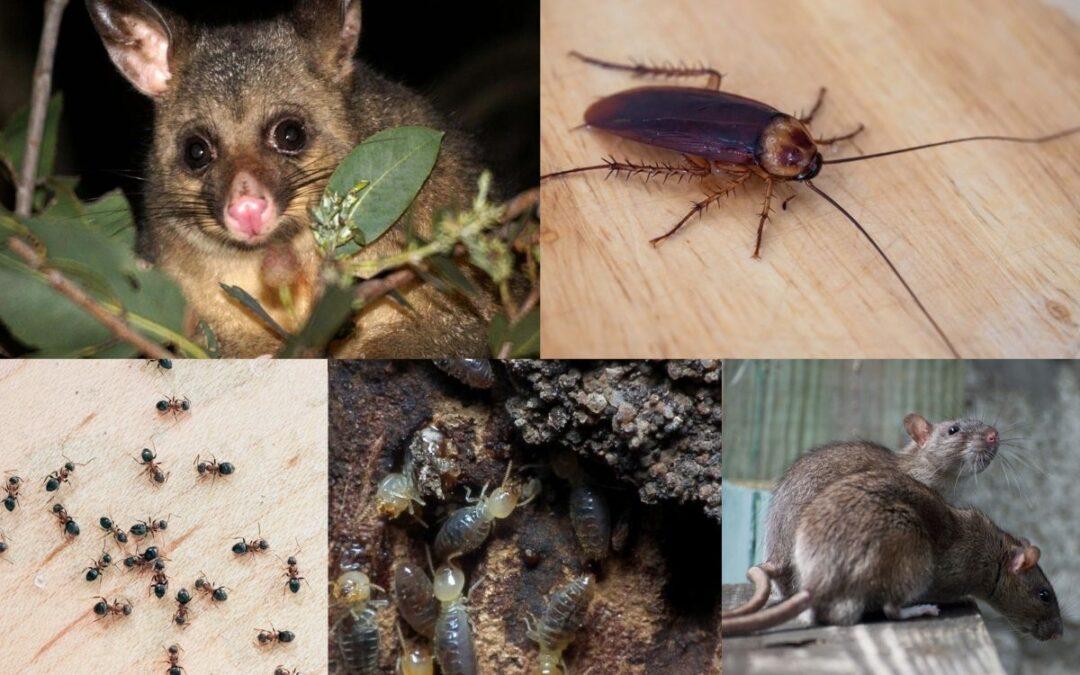 melbourne pests in winter