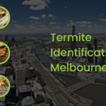 termite identification melbourne
