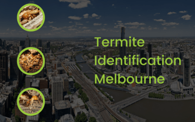 What You Need To Know About Termite Identification In Melbourne